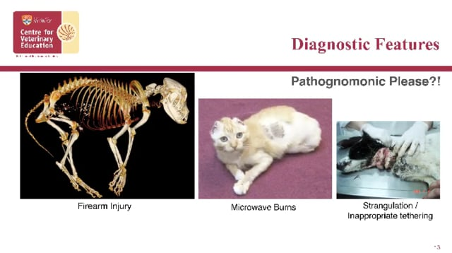 Non-Accidental Injury Cases in Vet Practice