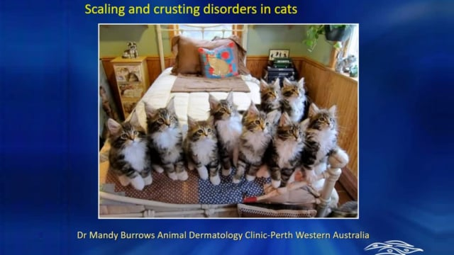 Approach to the Cat with Scaling and Crusting Dermatitis