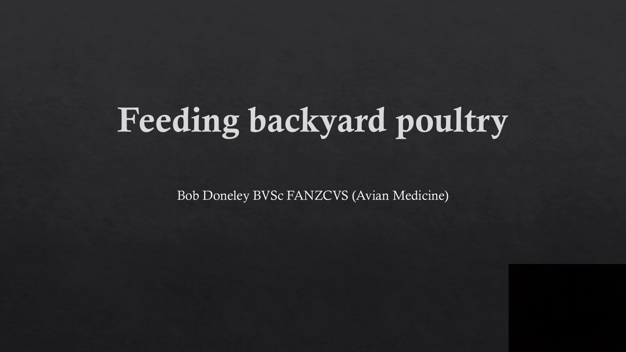 Feeding Backyard Chickens for Optimal Health WebinarPLUS