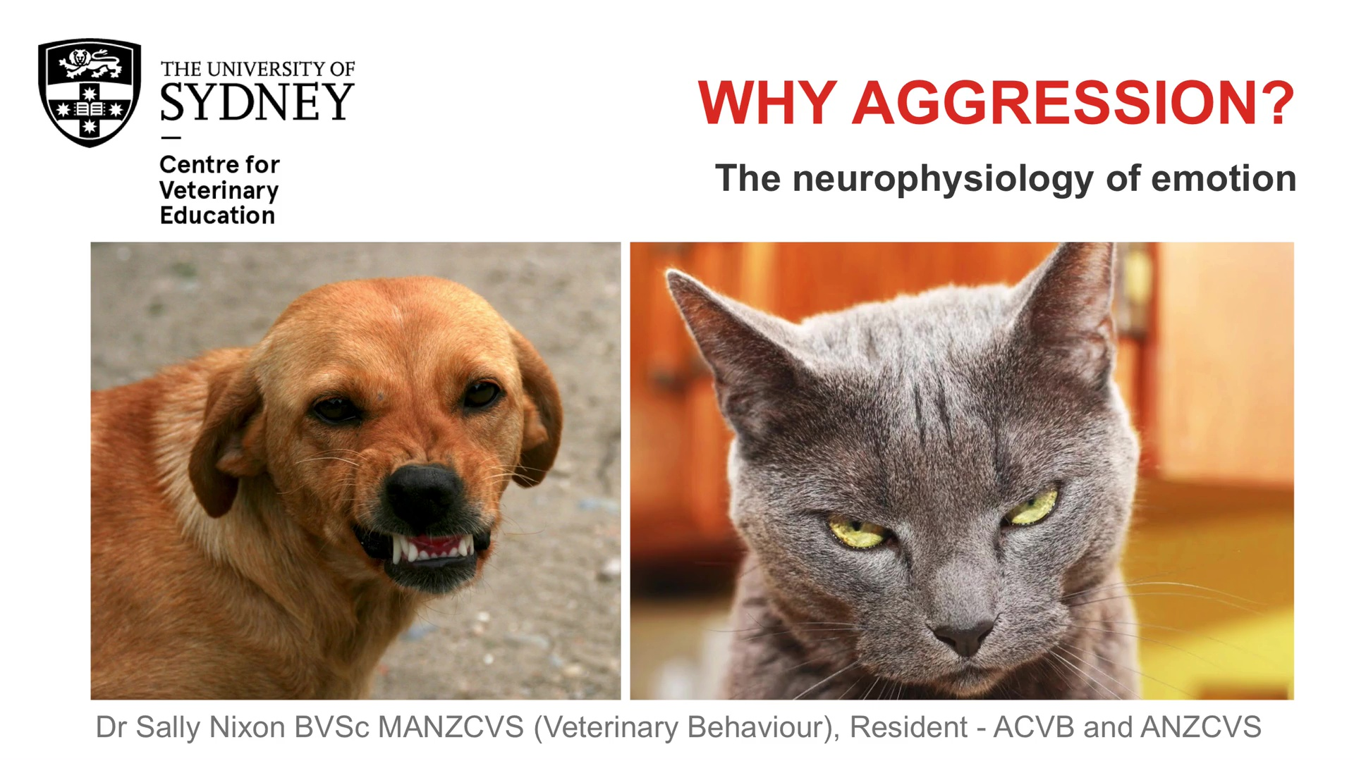 Why Aggression? The Neurophysiology of Emotion WebinarLIVE!