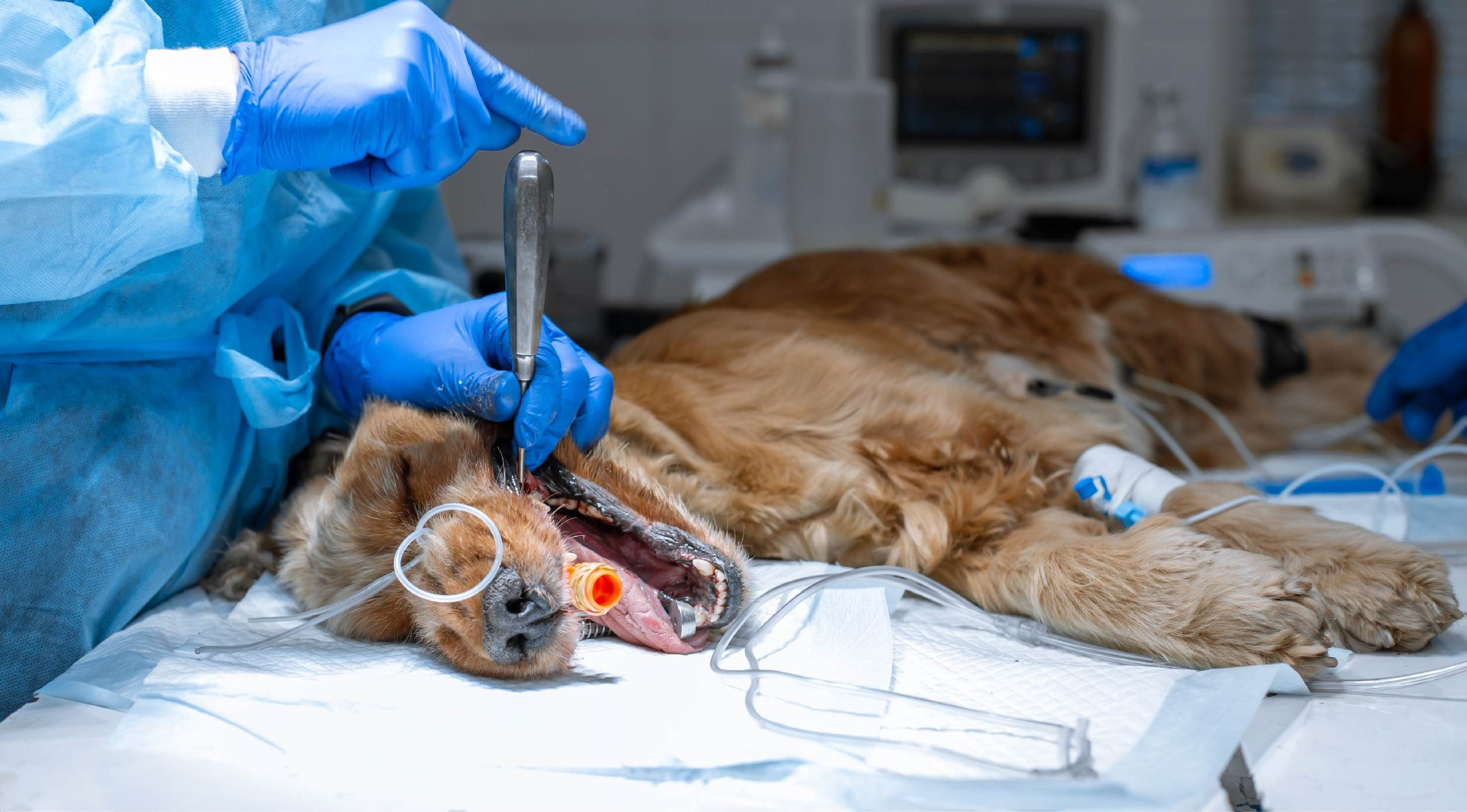 Masterclass in Diabetes Management in Dogs & Cats TimeOnline