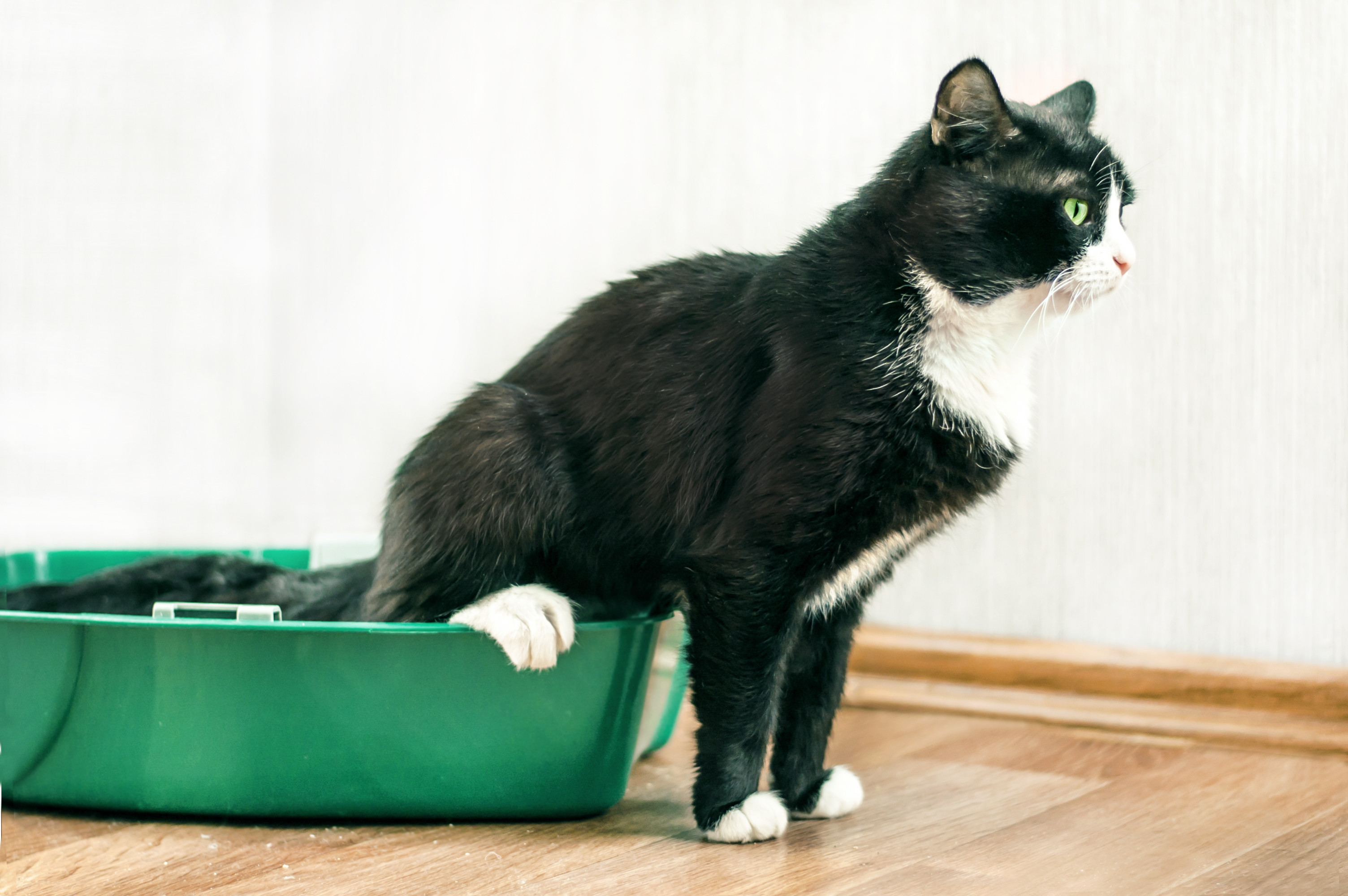 Chronic Diarrhoea in Dogs & Cats: a Logical Approach